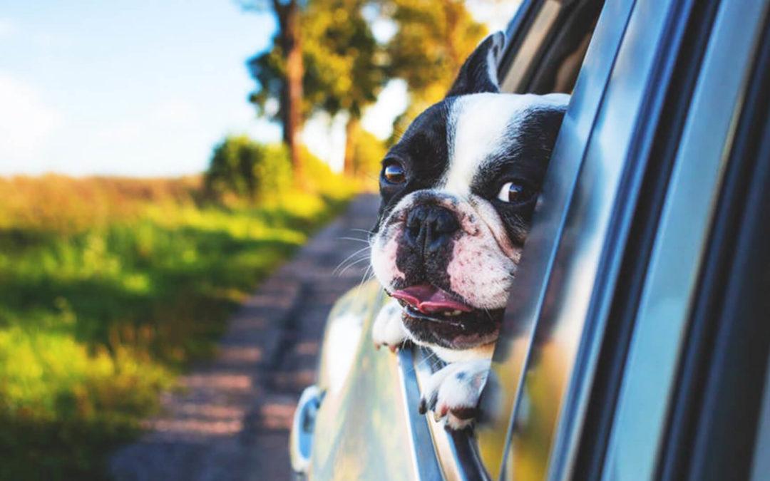 Czy warto czipować nasze psy i koty?