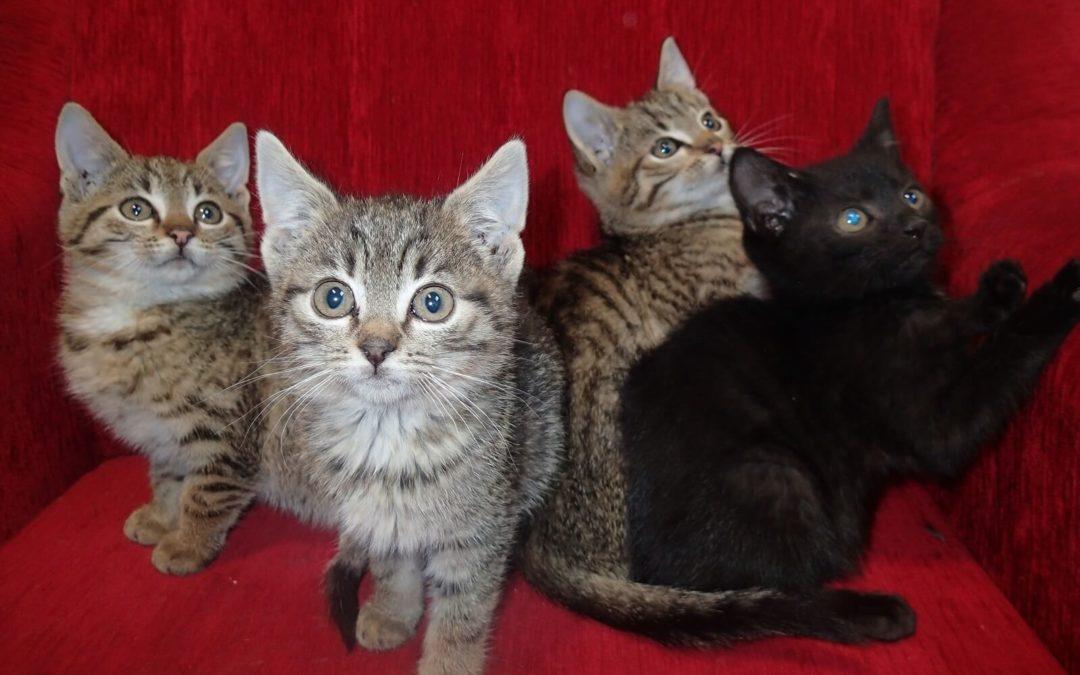 Bezdomne koty – pomóżmy im