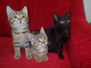 Bezdomne koty
